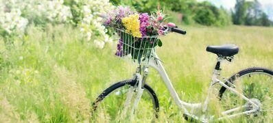 bicycle-788733_1920-1024x683